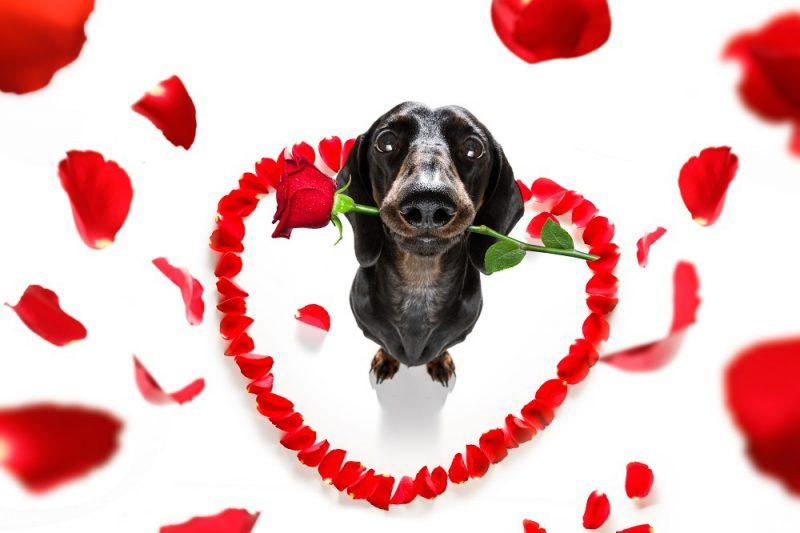 RCL - Ultra Pet   Valentines Pupper