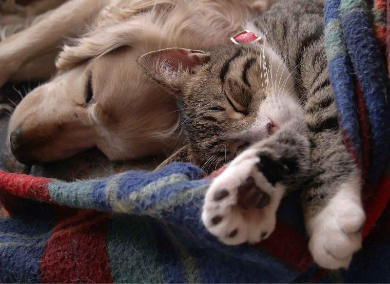 Cat and dog sleeping