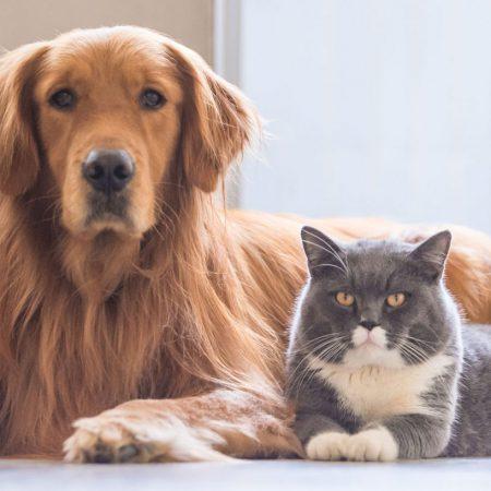 RCL - Ultra Pet | cat and dog