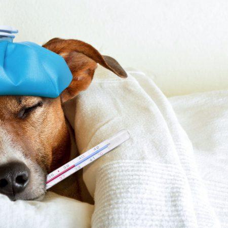 RCL - Ultra Pet | Sick dog