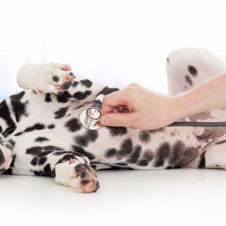 RCL - Ultra Pet | Dog at vet