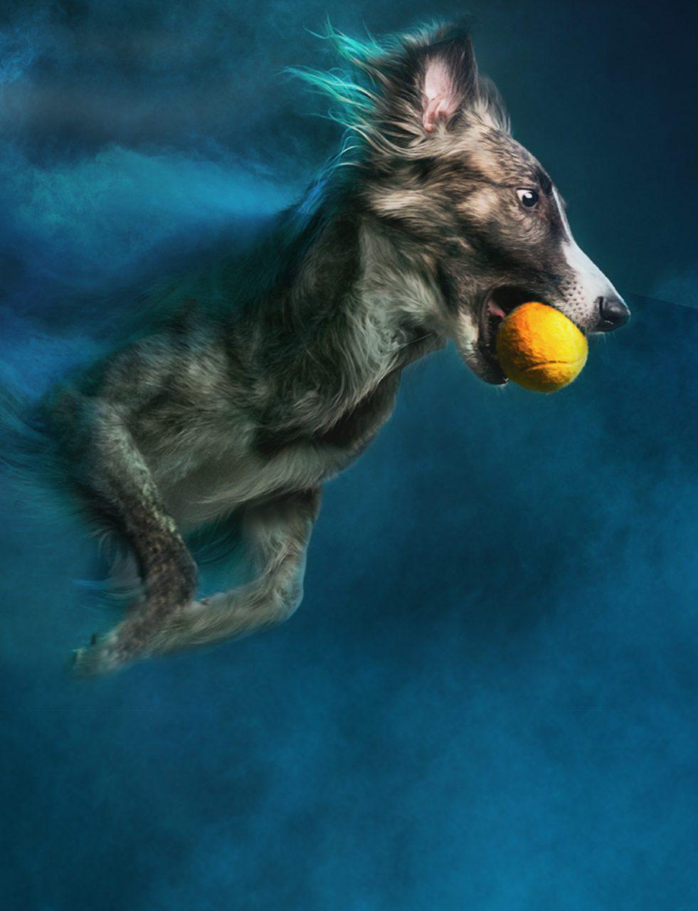 RCL - Ultra Pet | The co-watcherr Strong Dog