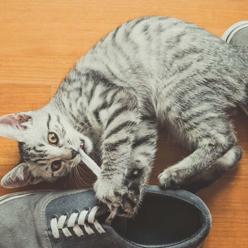 Optimal Balance Cat food