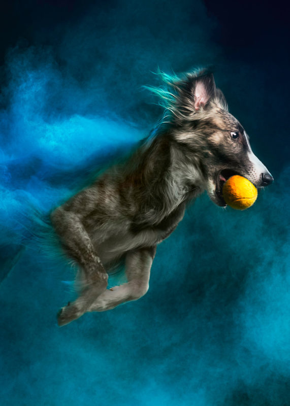 RCL - Ultra Pet | Dog with yellow ball