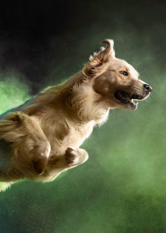 RCL - Ultra Pet | Jumping Dog