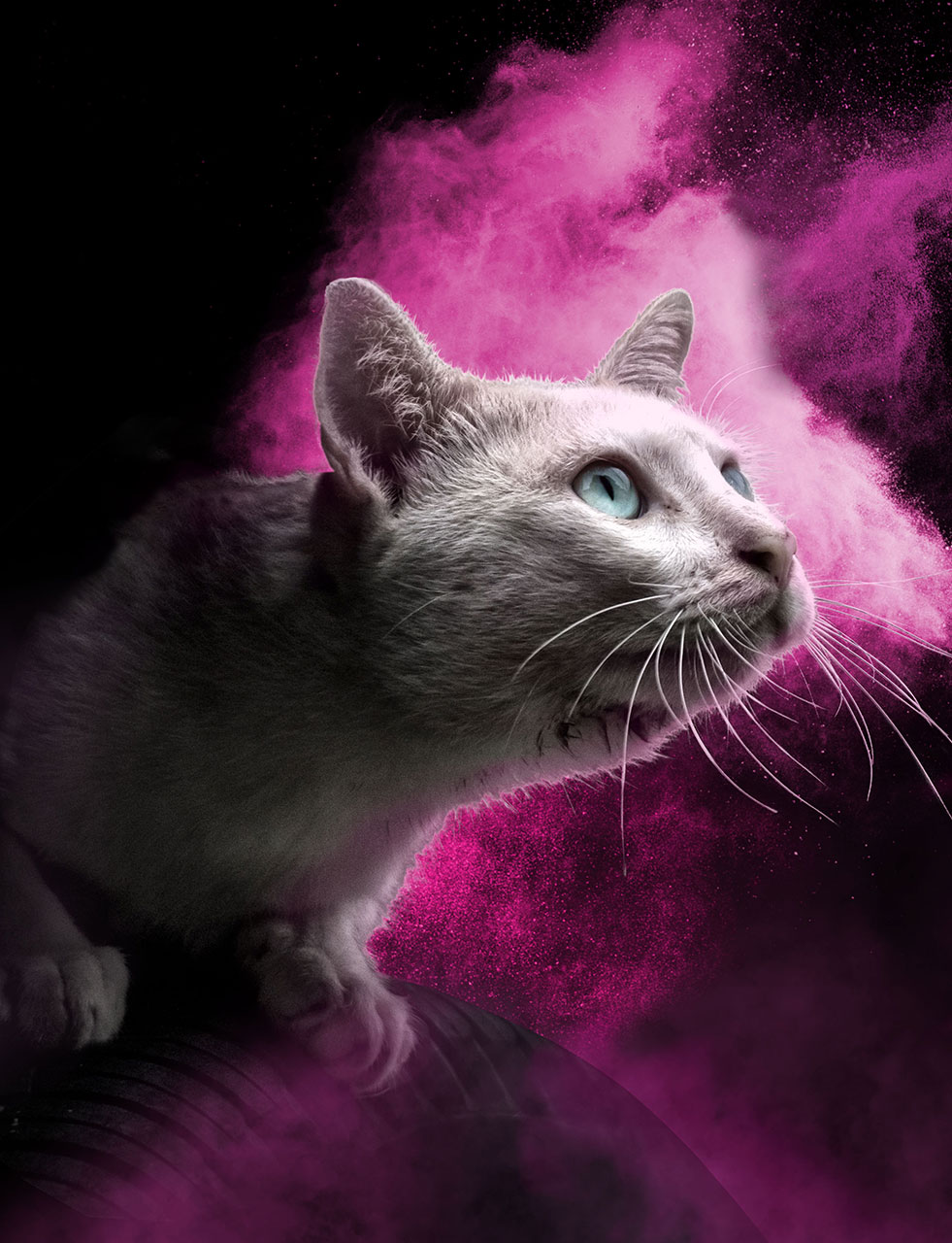 RCL - Ultra Pet | White cat